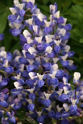 Photograph - Blue Wildflower 1 by Robert Lozen