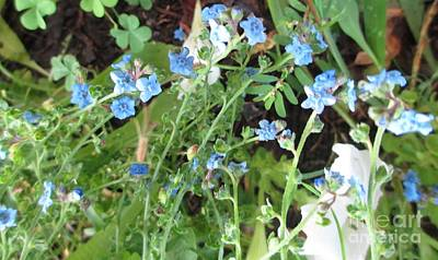 Photograph - Blue Wildflowers by Barbara Yearty