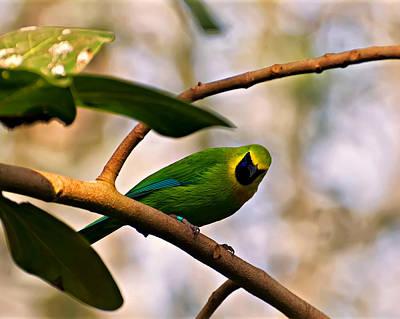 Digital Art - Blue Winged Leaf Bird by Chris Flees