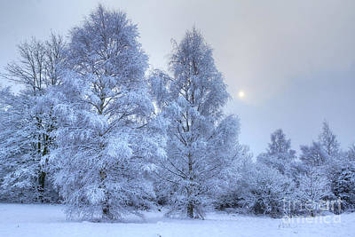 Photograph - Blue Winter by David Birchall