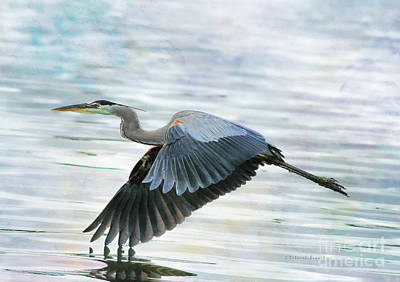 Heron Photograph - Blue With Grace And Beauty by Deborah Benoit