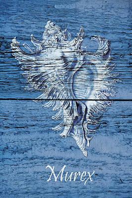 Reclaimed Wood Wall Art - Painting - Blue Wood Murex by Cora Niele