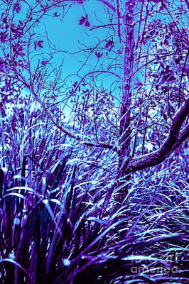 Blue Wooded Fantasy Original by Liesl Marelli
