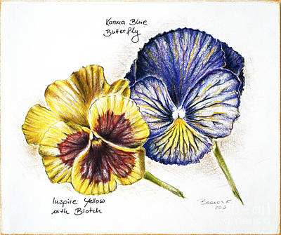 Drawing - Blue Yellow Pansies by Katharina Filus