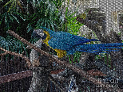 Photograph - Blue-yellow  Parrot by Oksana Semenchenko