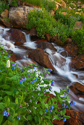 Floral Photos - Bluebell Creek by Darren  White