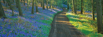Dirt Roads Photograph - Bluebell Flowers Along A Dirt Road by Panoramic Images