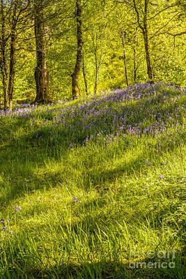 Dappled Light Photograph - Bluebell Flowers by Amanda Elwell