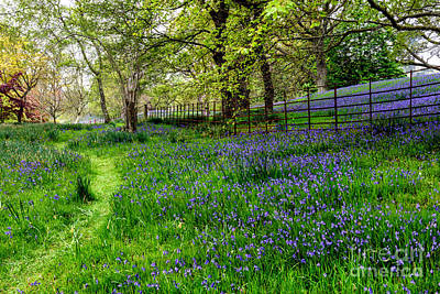 Fence Digital Art - Bluebell Way by Adrian Evans