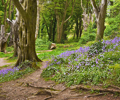 Photograph - Bluebell Wood - County Down by Jane McIlroy