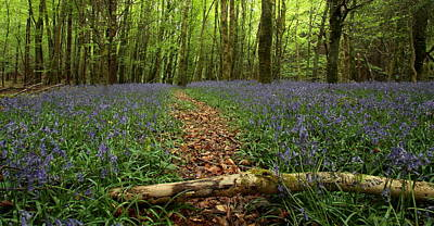 Photograph - Bluebell Woods by Peter Skelton