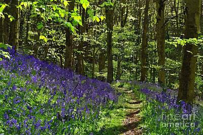 Bluebell Woods Photo Art Art Print