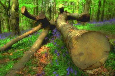 Wales Photograph - Bluebell Woods The Wenallt 8 by Robert J Taylor