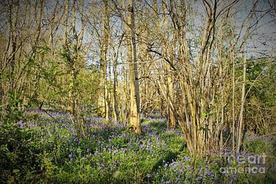 Photograph - Bluebells Wood by Katy Mei