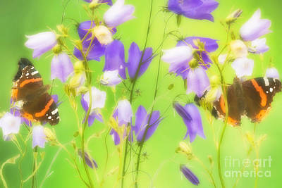 Bluebells Photograph - Bluebells And Butterflies by Gry Thunes