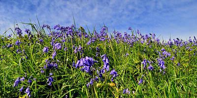 Photograph - Bluebells by Barbara Walsh