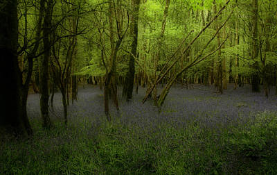 Photograph - Bluebells Dream by Peter Skelton