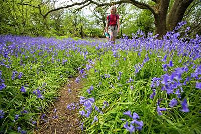 Blue Flowers Photograph - Bluebells Growing On A Limestone Hill by Ashley Cooper