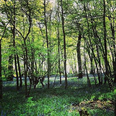 Woodland Photograph - Bluebells In Pittswood  by Nic Squirrell