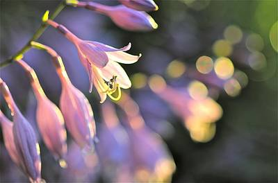 Photograph - Bluebells by Tracy Male