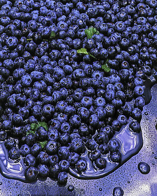 Photograph - Blueberries by Errol Wilson