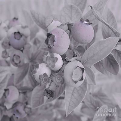 Blueberry Mixed Media - Blueberries In Bloom by Jason Grden