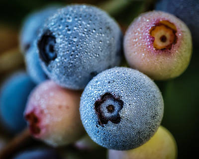 Photograph - Blueberries In Morning Dew by James Barber