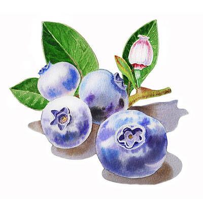 Watercolor Flower Painting - Artz Vitamins The Blueberries by Irina Sztukowski