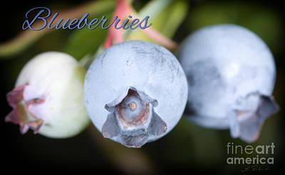 Blueberries On Bush Trio Art Print by Iris Richardson