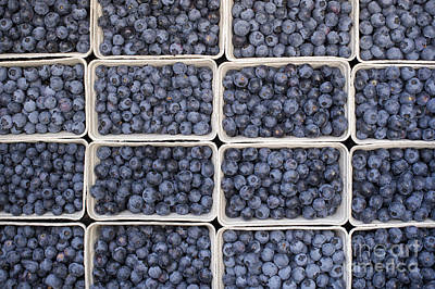 Blueberries Art Print by Tim Gainey