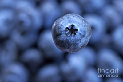 Photograph - Blueberry 2 by Sharon Talson