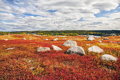 Photograph - Blueberry Barrens by Jim Dollar
