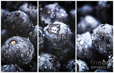 Photograph - Blueberry Panels by John Rizzuto