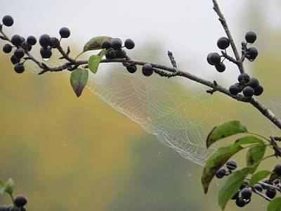Art Print featuring the photograph Blueberry Web by Nikki McInnes