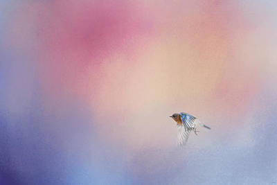 Tiny Bird Photograph - Bluebird 1 - I Wish I Could Fly Series by Jai Johnson