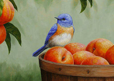 Bluebird Painting - Bluebird And Peaches Greeting Card 3 by Crista Forest