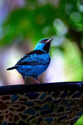 Photograph - Bluebird by Celso Diniz