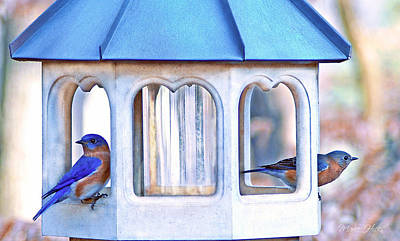 Photograph - Bluebird Couple At Sunrise Service by Marie Hicks