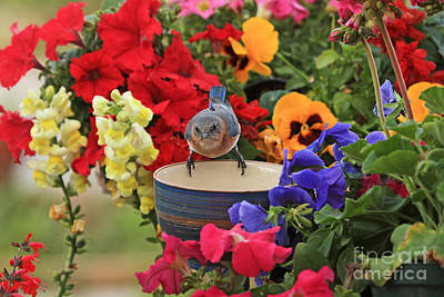 Bluebird Garden Art Print by Luana K Perez