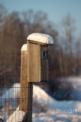 Bluebird House Covered With Snow Print by Linda Freshwaters Arndt