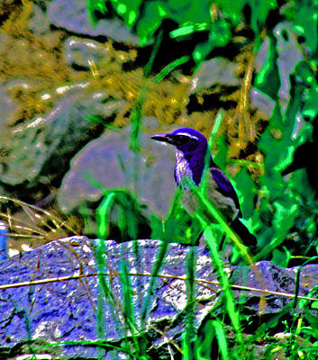 Photograph - Bluebird by Joseph Coulombe