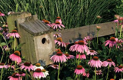 Birdhouse Photograph - Bluebird Nest Box On Fence Near Purple by Richard and Susan Day