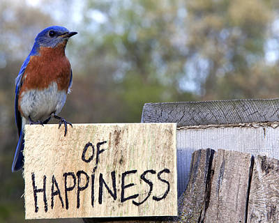 Bluebird Of Happiness Photograph - Bluebird Of Happiness by John Crothers