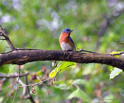 Photograph - Bluebird On A Tree Branch by Kay Lovingood