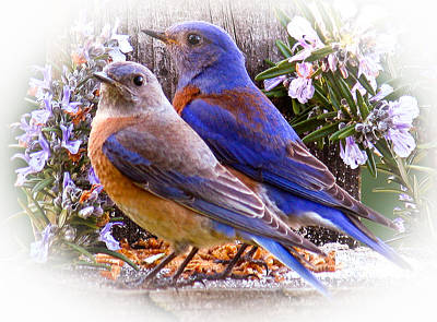 Bluebird Wedding Art Print by Jean Noren