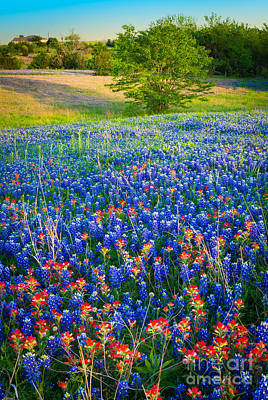 Pasture Scenes Photograph - Bluebonnet Carpet by Inge Johnsson