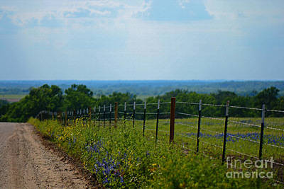 Photograph - Bluebonnet Country by Connie Fox