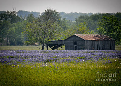 Photograph - Bluebonnet Field And Barn by Cheryl McClure