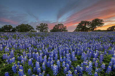 Texas Wildflowers Photograph - Bluebonnet Field Of Glory by Rob Greebon