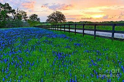 Photograph - Bluebonnet Fields Forever Brenham Texas by Silvio Ligutti